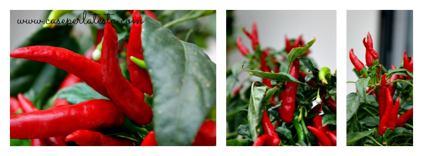 Ricetta segreta per peperoncini piccanti sott'olio: !* Hot peppers in oil: secret recipe!
