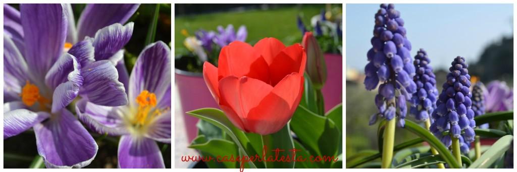 fiori_2